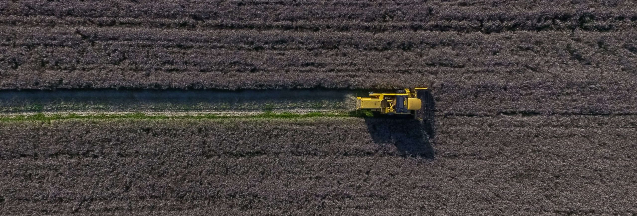 A valuable and versatile raw material grows on Nordic golden fields